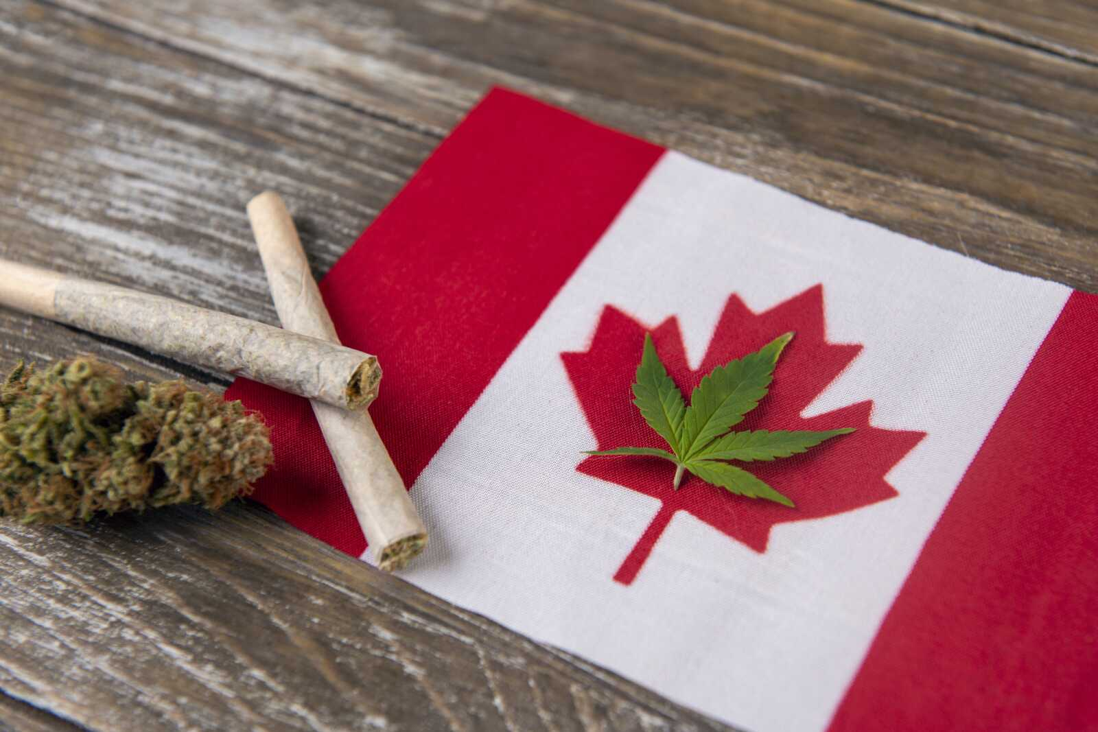 Canada and Marijuana: Not a big player but still strong - tolktalk