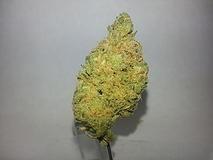 Clementine - sativa Strain - tolktalk