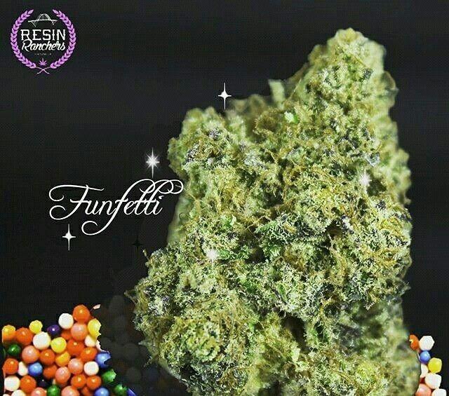 Funfetti - hybrid Strain - tolktalk